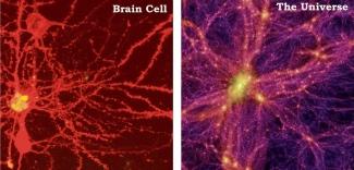 brain-cell